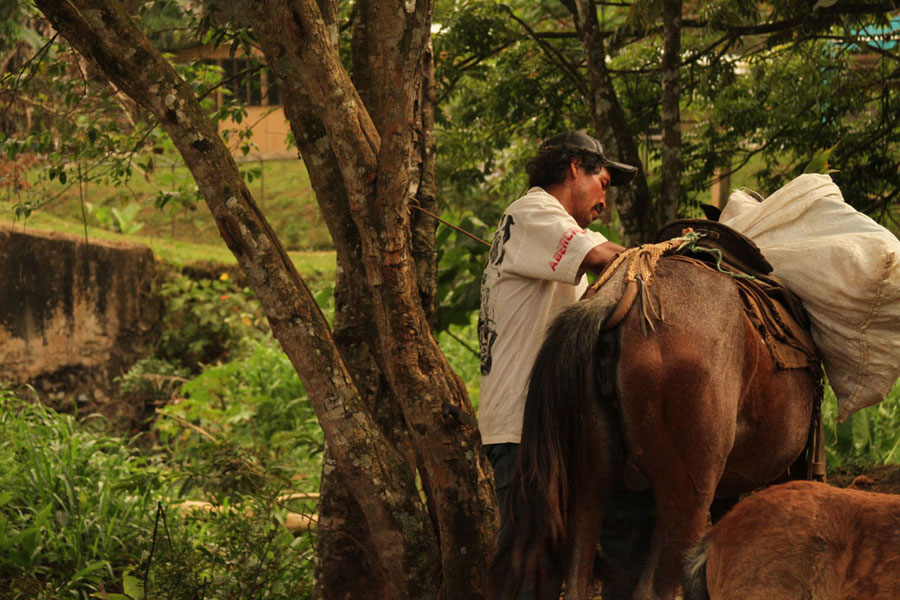 A man saddles up a horse near the village center. Animals including horses, chickens, pigs, cows and goats are kept in Boruca and the surrounding countryside. Though some villagers cannot afford automobiles, they are also common in Boruca.